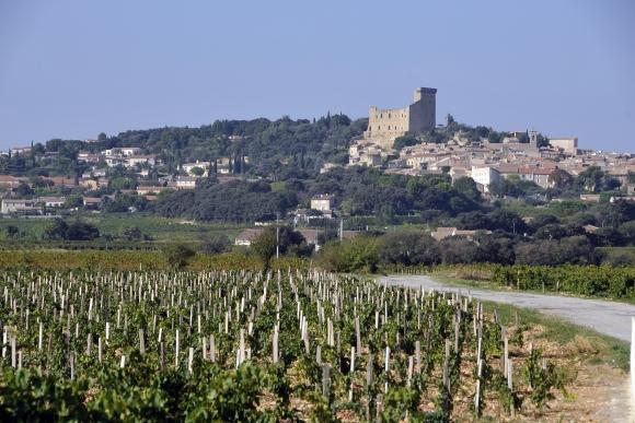 chateauneuf du pape vineyard